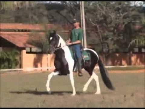 Senna da Granada – Clic Marchador
